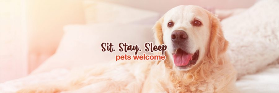 Pets Welcome - Home Page - Tifanny Angelia